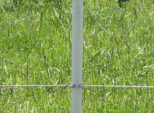 Temporary Electric Fence